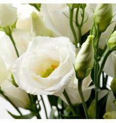 Эустома крупноцветковая Rosie White 5 шт драже