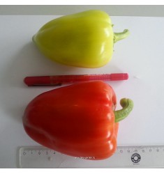 Перец сладкий Тацит F1 5 шт семян