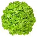 Салат Орфей 100 штук семян