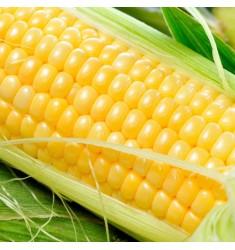 Кукуруза сахарная Noa F1 10 шт семян