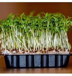 Кресс салат Дукат 1 грамм