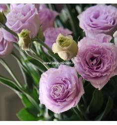 Эустома Mariachi Lavender 5 шт драже