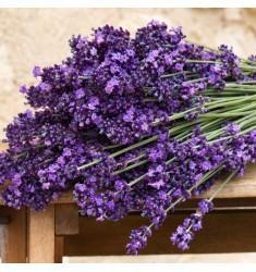 Лаванда Lavance Purple 10 шт семян