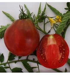 Томат Аксайский Трюфель 25 шт семян