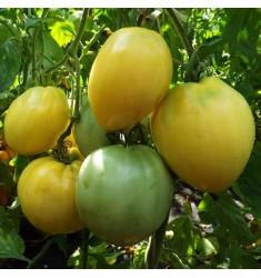 Томат Белое Сердце Киля 25 шт семян