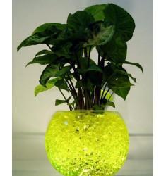 Гидрогель Агрикола жёлтые шарики 20 гр