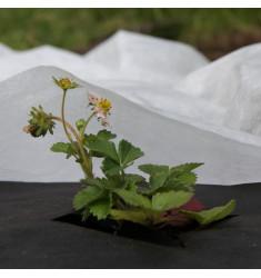 Спанбонд Агролюкс 60 белый в упаковке 4,2*10 м