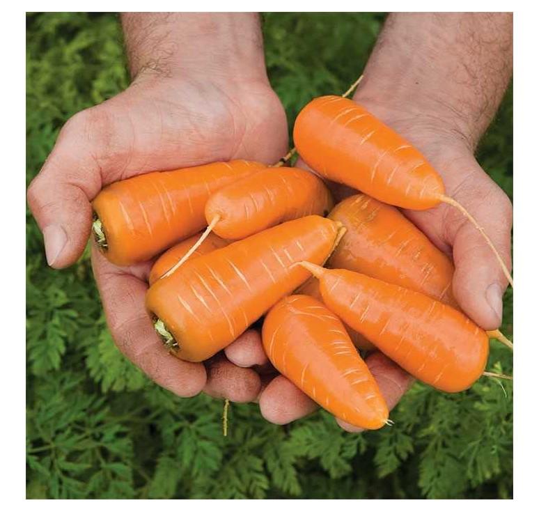 Морковь Red Core 2 мл