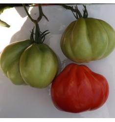Томат Тюрбан Магриба 5 шт семян