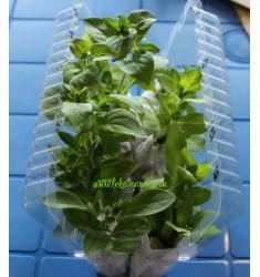 Блистер для перевозки растений на 12 корней 1 шт