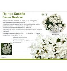 Пентас ампельный Бихайв 3 шт семян