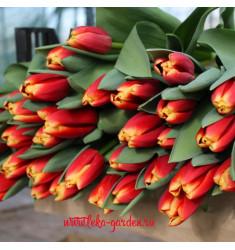 Тюльпан Булгари 1 шт