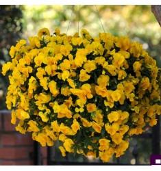 Виола ампельная Cool Wave F1 Golden Yellow 3 шт семян