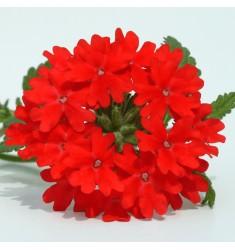 Вербена ампельная Obsession Cascade Scarlet 5 шт семян