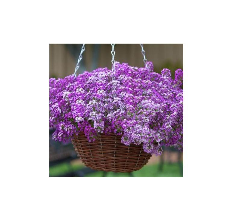 Алиссум Clear Crystal Lavender 10 семян