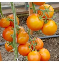 Томат Оранжевая Мама F1 семена 0,05 г