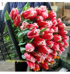 Тюльпан бахромчатый Канаста 1 шт