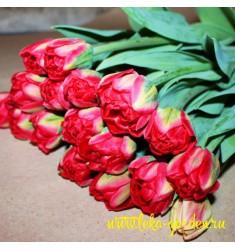 Тюльпан пионовидный Pamplona 1 шт